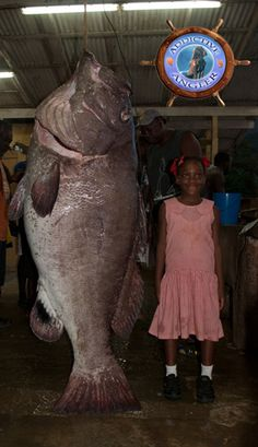 A local fisherman snagged this beast, a 300+ pound warsaw grouper, with a local girl from the village [Caribbean]