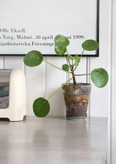 Små skulpturelle planter i rustikke potter (hér Pilea peperomioides) giver stiligt grønt til f.eks. skrivebordet. Via trendenser.se