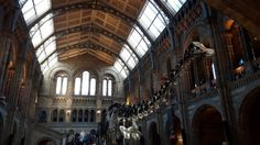 Natural History Museum   © Boris Dzhingarov/Flickr