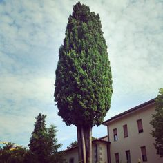 They grow them big. My Happy Place, Italy Travel, Clouds, Tuscany Italy, Big, Ethnic Recipes, Photography, Iphone, Instagram