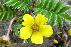 Flora, Medicine, Therapy, Plant, Plants
