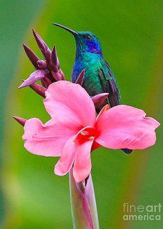 Flor con colibrí