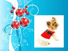 Holiday dog (created for use in Power Point presentation in clinic lobby while throwing in educational content for clients)