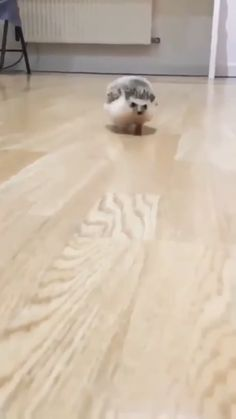 faster must go Must go fasterYou can find Cute baby animals and more on our website Cute Little Animals, Cute Funny Animals, Cute Cats, Hedgehog Pet, Cute Hedgehog, Funny Animal Memes, Funny Animal Pictures, Baby Pictures, Meme Pictures