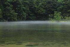 2014-07-04 霧 上高地の明神池で霧が出ていることに気がついた!! 初めて、「ドキドキして」撮れませんでした!! 霧って、どう撮ったらいいのか~も^^;;; 幻想的な光景に出会えた一瞬に感謝です♪