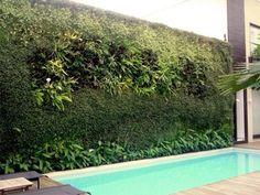 Jardim vertical na parede lateral da piscina