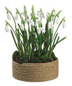 Snowdrop Basket Arrangement