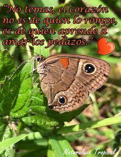 No temas, el corazón no es de quien lo rompe, es de quien aprende a amar los pedazos.Bella Mariposa