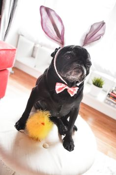 The Easter Bunny and Peep