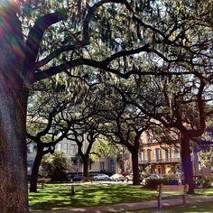 Oglethorpe Square, Savannah