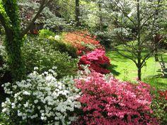 Private Azalea Garden