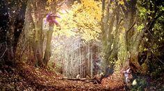 """Zimtstern """"Leaves"""" by Zimtstern. Zimtstern Fall/Winter 2009/2010 Spot """"Leaves"""" by Marco Lutz"""