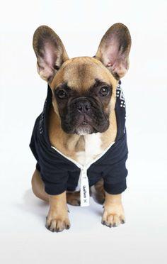 OnePiece Dog Style Lusekofte Onesie Navy/White