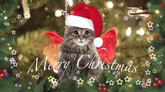 Funny cat sings a song We Wish You a Merry Christmas. Happy Day, Grinch, Funny Cats, Wish, Congratulations, Merry Christmas, Owl, Animals, Hapy Day