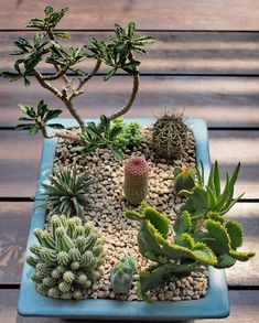 Use these DIY cactus and succulent garden decorations. Over twenty cactus and succulent DIY decor ideas you need to use. Feed your design ideas now. Mini Cactus Garden, Succulent Gardening, Garden Terrarium, Succulent Terrarium, Cactus Flower, Cacti And Succulents, Planting Succulents, Cactus Plants, Flower Pots
