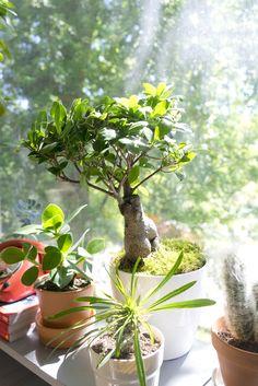 Windowsill plants in the sun - so fresh and pretty!