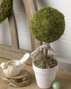 Look at this fun use of a Moss topiary ball-- placed on a dowel post in a flower pot, tied with a cute rustic ribbon, and the base covered in Spanish Moss.  Find these moss products in our store to re-create this look yourself.  Photo from @kippiathome - love it!⁣ ⁣ #diycrafts #craftidea #diyproject #artproject #doityourself #ifeelcrafty #getcreative #create #creativity #moss #homedecor #spring #decoration #spanishmoss #topiary #decorated