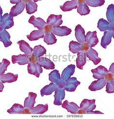Desert Rose lilac flower. Seamless pattern. Sketch on a white background. vector by EkaterinaP, via Shutterstock