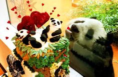 Yang Guang, the giant panda, attempts to lick a cake through the glass pane of the enclosure at Edinburgh Zoo.