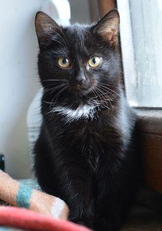 Sówka  kontakt w sprawie adopcji: 512 182 032  fundacja@felineus.org