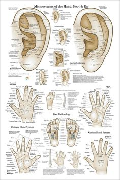 Acupuncture Ear Hand Foot Microsystem Poster X Acupressure Massage Reflexology Chart Akupunktur-Ohr-Handfuß-Mikrosystem-Plakat 24 Acupressure Massage, Hand Reflexology, Acupressure Therapy, Hand Accupressure, Acupressure Chart, Lymph Massage, Ear Acupressure Points, Ear Anatomy, Traditional Chinese Medicine
