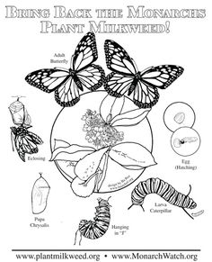 Plant  Milkweed Complex  Coloring page