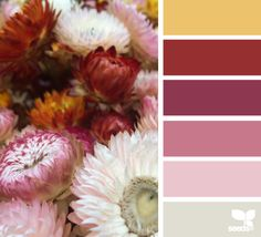 Straw Flower Hues - http://design-seeds.com/index.php/home/entry/straw-flower-hues