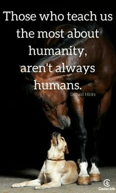 choose compassion for all  go vegan