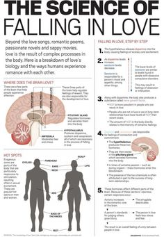 Psychology infographic and charts Male & Female Erogenous Zones and the Science of Falling in Love Infographic Description Male & Female Erogenous Zones Med Student, Female Erogenous Zones, Science Of Love, Biology Of Love, Brain Science, Science Chemistry, Science Facts, Romantic Poems, Romantic Gifts