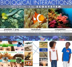 This lesson encourages students to think-pair-share the different interactions between organisms.   Video and activities.