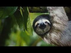 Feeling overworked? The animals of #CostaRica are here for you.