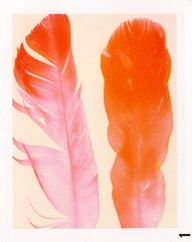 watercolor feathers, love that it is orange.