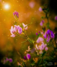 Pink by Yailin Rabelo on 500px