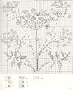 Gallery.ru / Фото #7 - Medicinal Plants - Mosca
