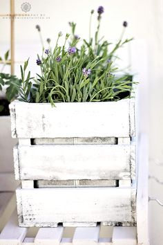 wooden crate style planter box~ adorable for herb garden Container Plants, Container Gardening, Pallet Gardening, Outdoor Landscaping, Outdoor Gardens, Lavender Fields, Lavender Flowers, Pretty Flowers, Garden Planters