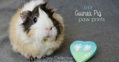 Cali Cavy Collective: a blog about all things guinea pig: Guinea Pig Paw Prints Tutorial