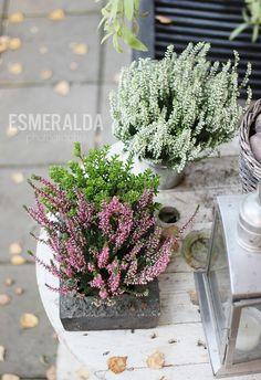 Autumn - Esmeralda's