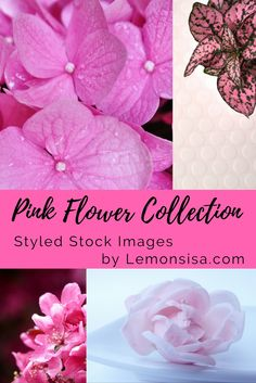 Lemonsisa Free Styled Stock Photos Opt-In