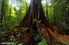 ► Tropical nations make progress in slowing deforestation. Kuddos to Brazil, Costa Rica, and Mexico!