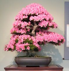 Picture Of best trees for bonsai and how to care for them  20