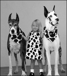 So sweet! #cute #girl and #Great #Danes