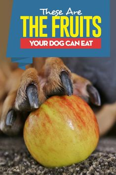 The Dog Trainer : Pica: Eating Things That Aren't Food ** Continue with the information at the image link. Fruit Dogs Can Eat, Fruits For Dogs, Can Dogs Eat, Homemade Dog Treats, Pet Treats, Natural Dog Food, Dog Diet, Dog Eating, Dog Supplies