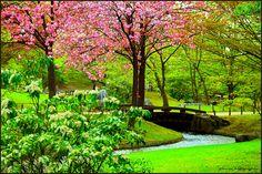 The Japanese gardens, Hasselt, Limburg, Belgium