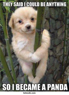 Cute puppy - PandaDog :))