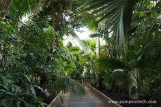 Inside the Palm House at the Royal Botanic Gardens, Kew.