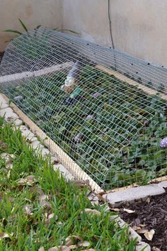 DIY: Strawberry Cage, or make a little bigger for blueberry bushes, etc.