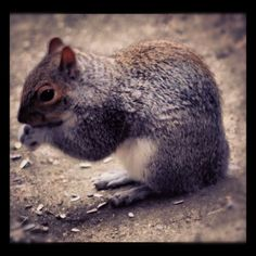 This is Notail.   #squirrels