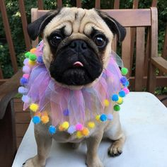 """""""Why you put this silly, frilly thing on me?"""""""