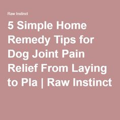 Dog Joint Pain Home Remedy
