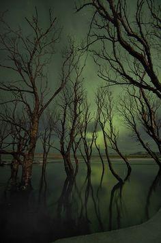 backlit trees